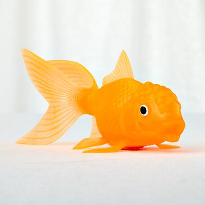 All That Glitters Is Goldfish